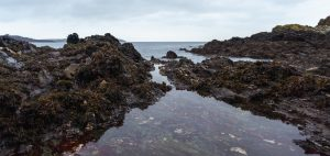 wild swimming cornwall rock pools