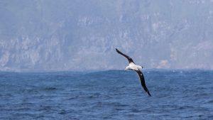 Albatross Noah Strycker