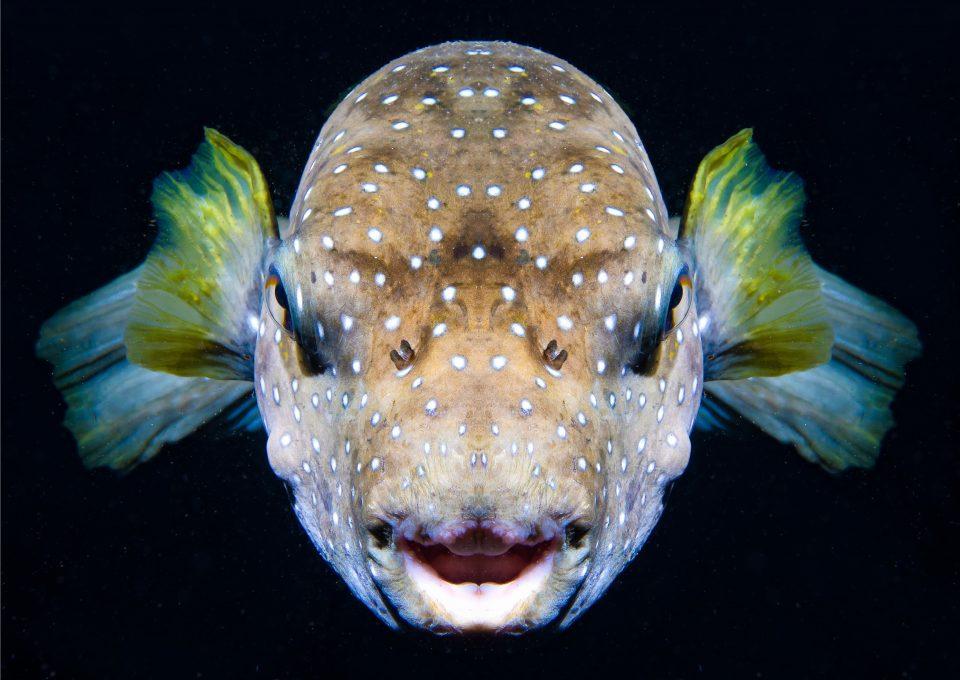 pocillopora coral reef diving