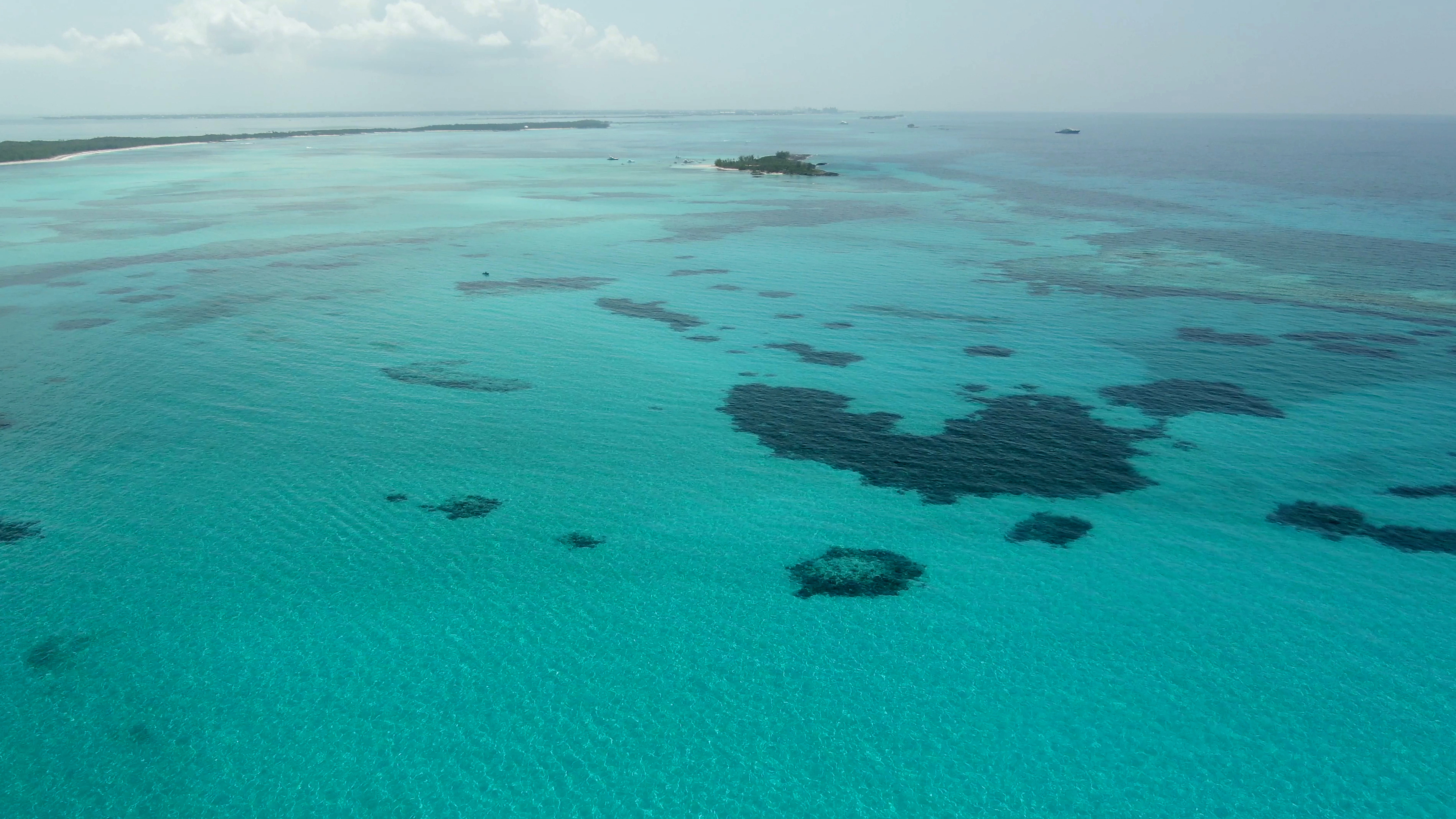 shark sanctuary Bahamas