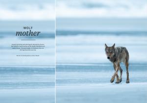 Oceanographic Magazine, Issue 16, Wolf mother