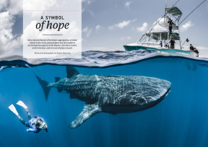 Oceanographic Magazine, Issue 17, Mexico whale sharks