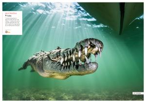 American crocodile, Cuba, Oceanographic Magazine, Issue 17