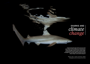 Sharks and climate change, Oceanographic Magazine, Issue 17