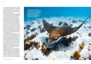 Unicorn of the sea, Ornate eagle ray, Ningaloo reef, Australia, Oceanographic Magazine, Issue 17
