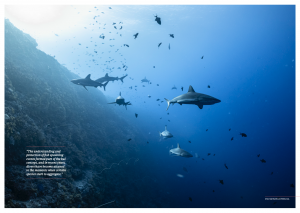 Palau reef, sharks, Oceanographic Magazine, Issue 17