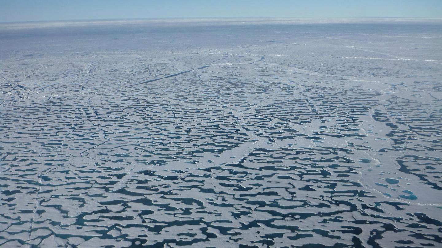 Arctic sea ice algae