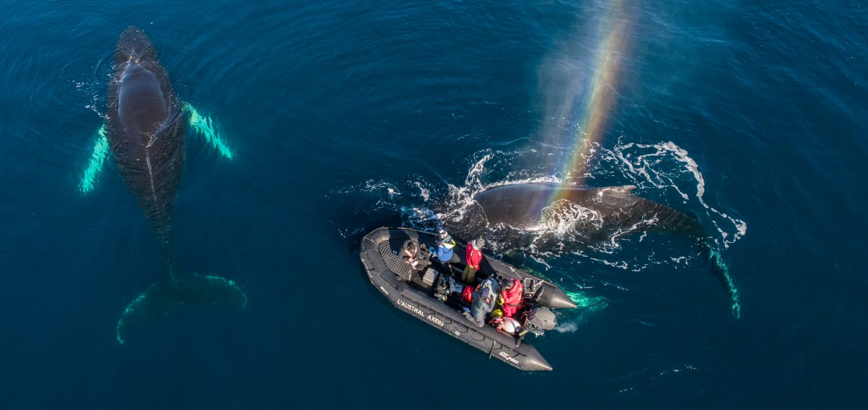 Richard Sidey Galexiid humpbacks