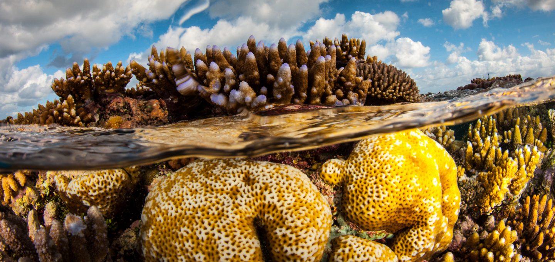 ribbon reefs great barrier reef