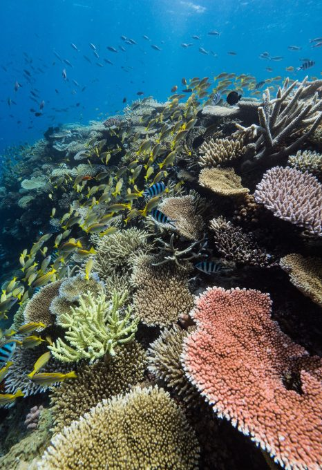 Great Reef Census Citizens of the Great Barrier Reef