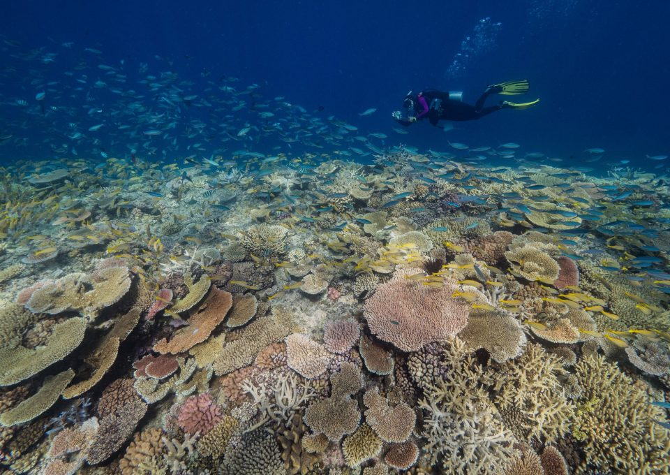 Great Reef Census Citizens of the Great Barrier Reef ribbon