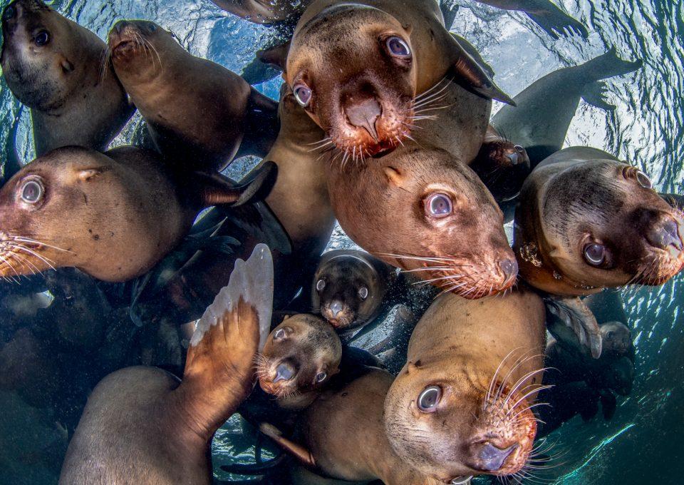 Celia Kujala seal peace pinnipeds