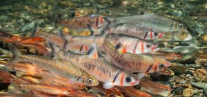 freshwater ecosystems USA