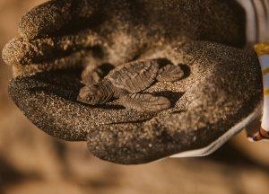turtle covid-19