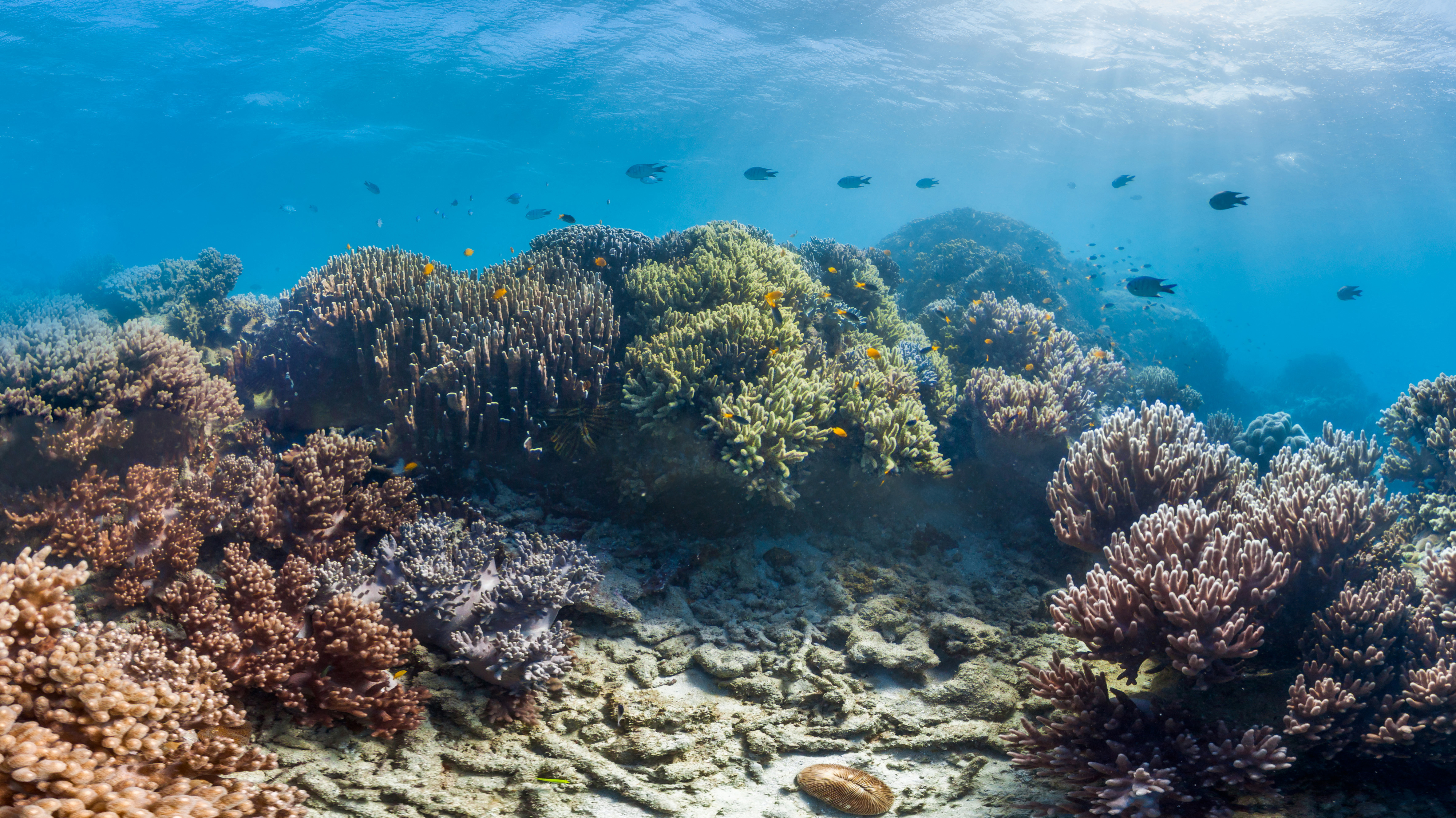 sunscreen impact coral reefs