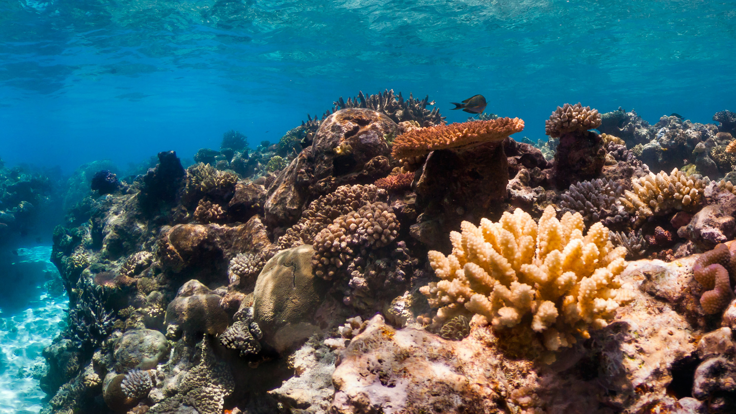 sunscreen impact coral reef