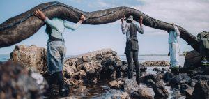 volunteers try to clean the ocean