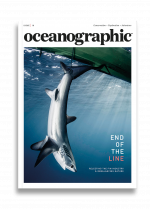 Issue 18, Oceanographic Magazine, Thresher Sharks, End of the line