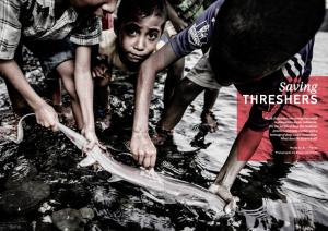 Issue 18, Oceanographic Magazine, Thresher sharks, Shawn Heinrichs