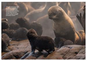 Issue 18, Oceanographic Magazine, Thresher sharks, Kuril Islands, fur seal