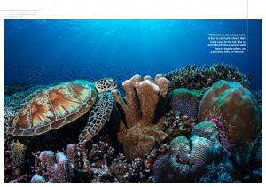 Issue 18, Oceanographic Magazine, Tubbataha turtle