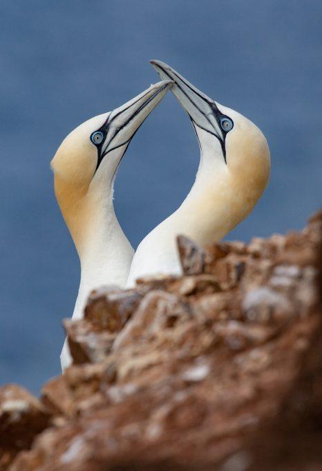 seabird colony