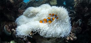 coral symbionts