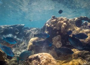 parrotfish reef coral symbionts