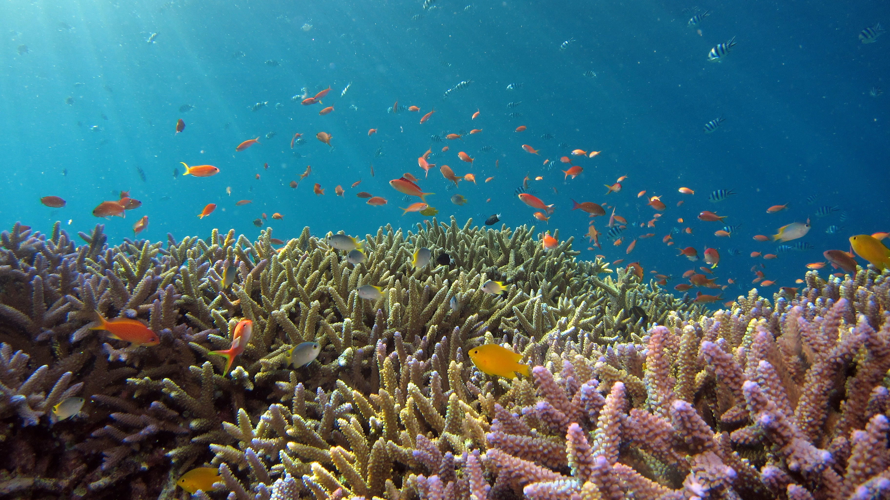 coral reef NeMO-Net