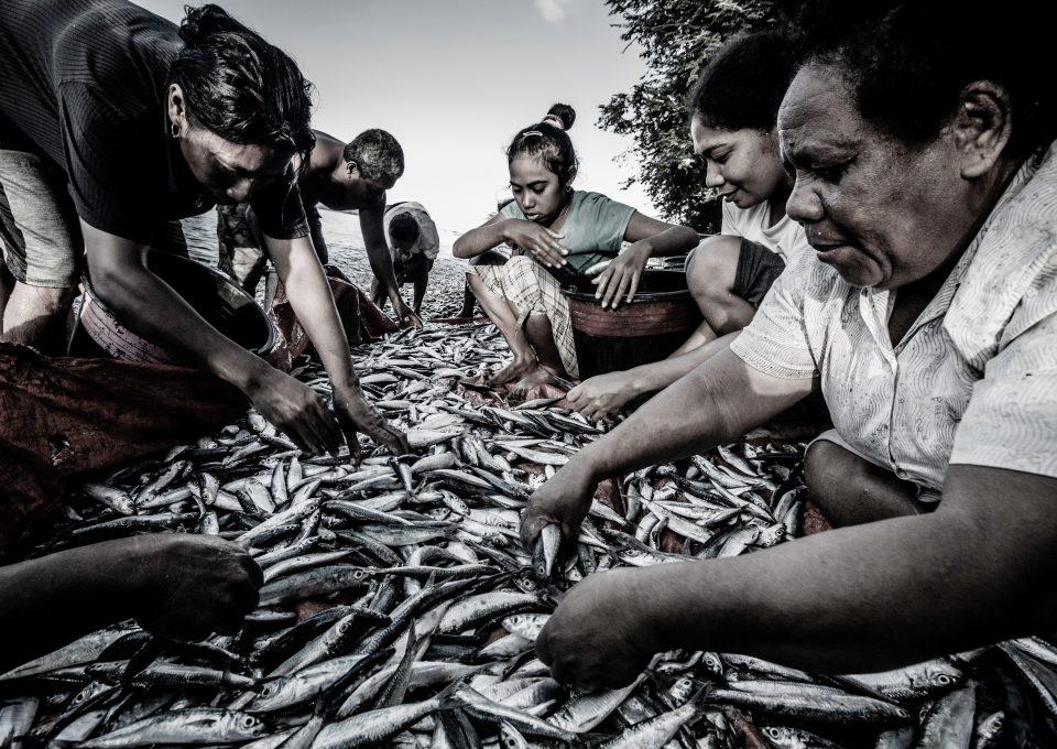 thresher shark indonesia alor children