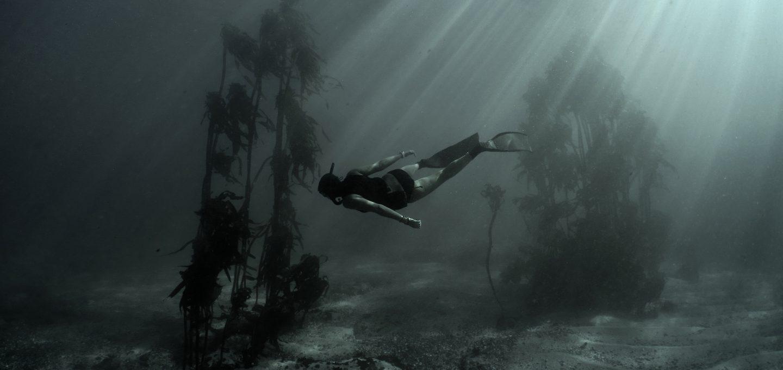 freediving octopus