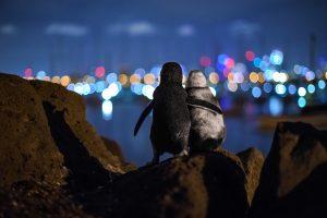 Ocean Photography Awards, Tobias Baumgaertner, penguins