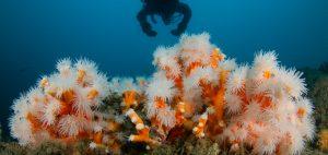coral restoration Spain