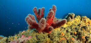 Coral Garden Med