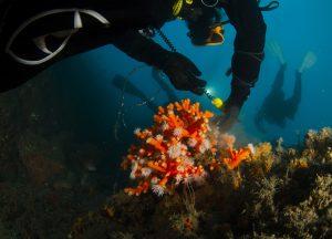 Mediterranean Corals
