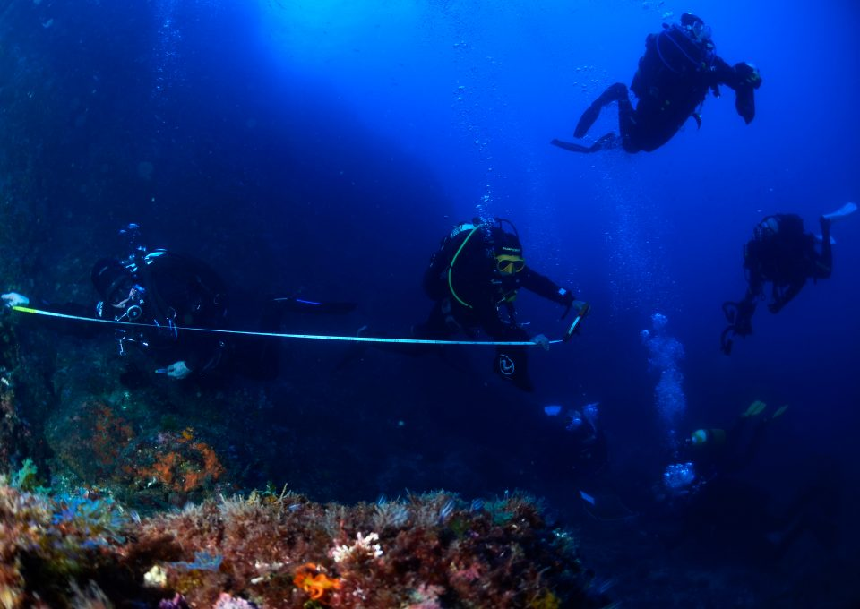 S.O.S Corales reef analysis