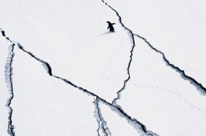 Penguin, Antarctica, John Weller