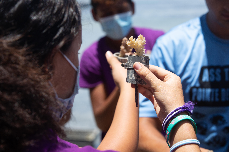 Polynésie: Lagon en péril, les apprentis gardiens de corail prennent le relais