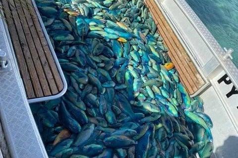 En Polynésie, une zone de pêche réglementée installée sur l'atoll d'Arutua