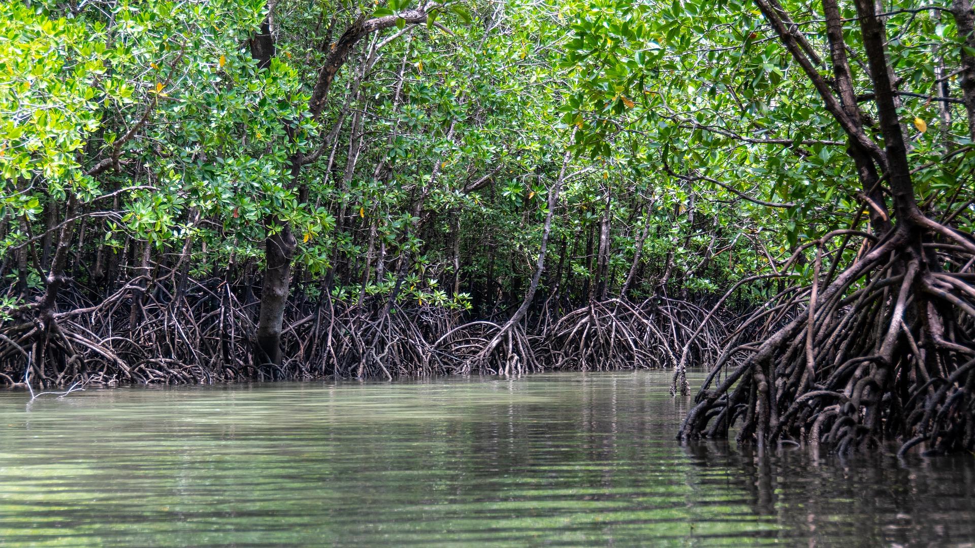 L'UICN donne un avis positif sur le projet de Stratégie nationale des aires protégées pour un cadre commun pour l'hexagone et les Outre-mer