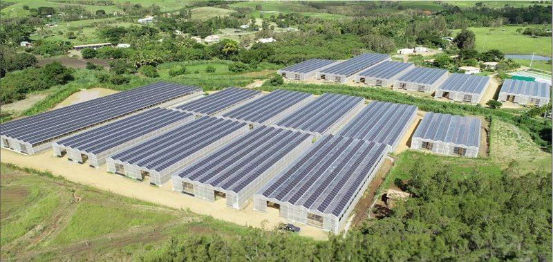 Polynésie : Sur l'île de Raiatea, deux hectares de vanille sous des serres photovoltaïques