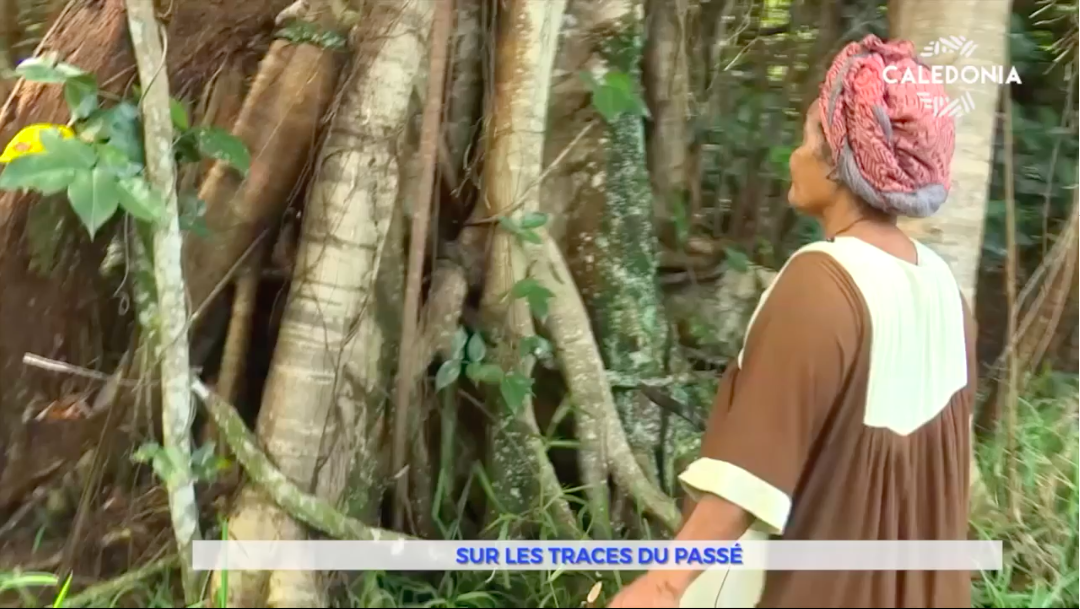 En Nouvelle-Calédonie, les femmes Kanak de « Pugaan Tevora » se réapproprient les savoirs traditionnels ancestraux