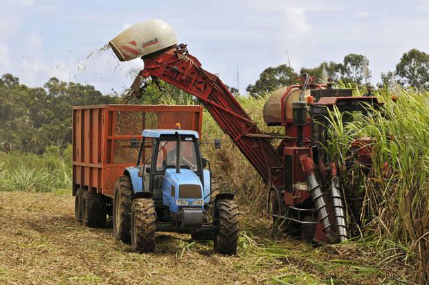 En Guadeloupe, la campagne sucrière peut enfin démarrer