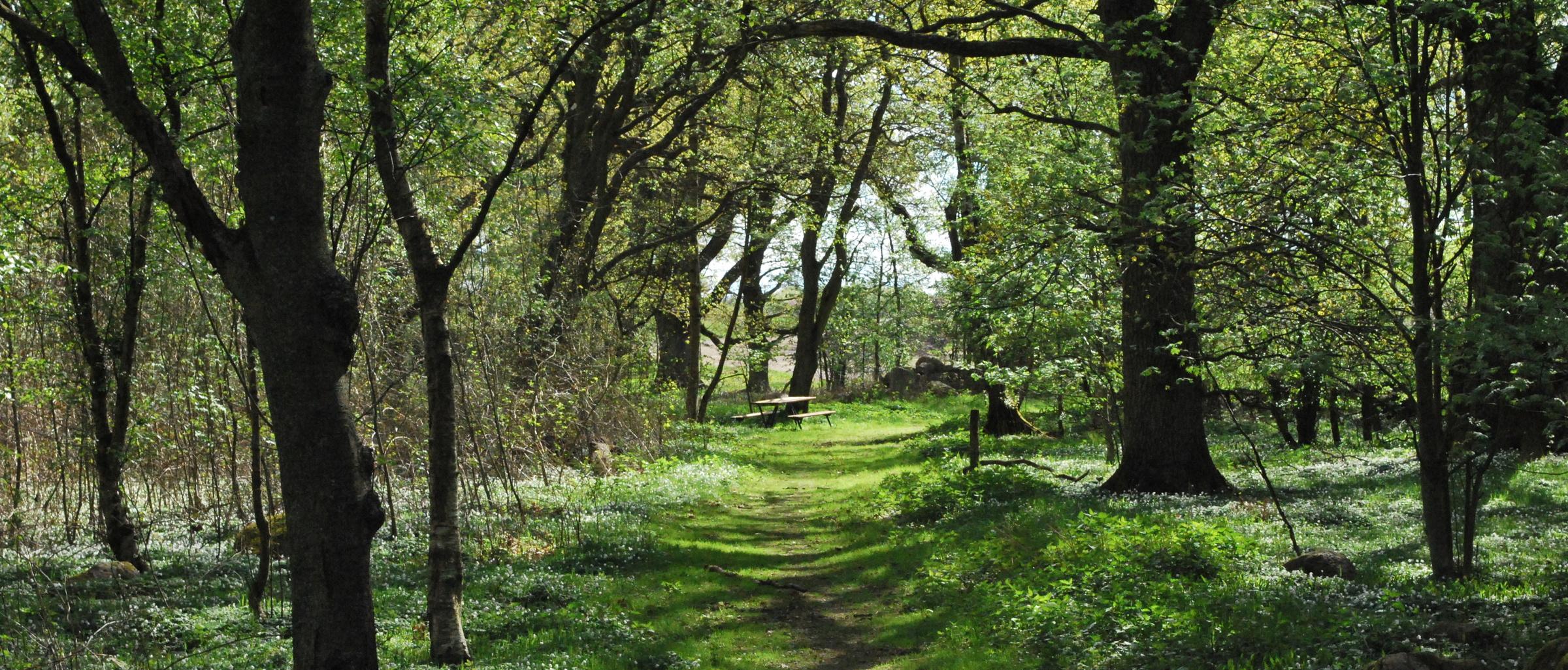 Prinsaskogen och v tmarken 004