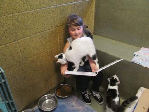 Voorlezen aan katten 2