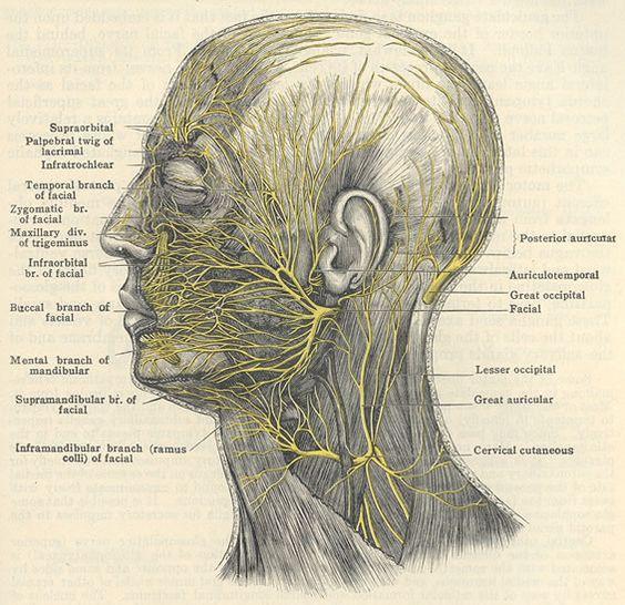 МРТ лицевого нерва