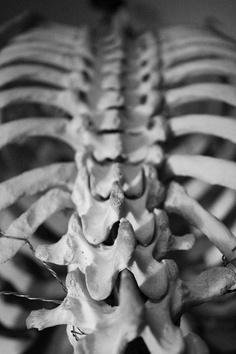 КТ или МРТ грудного отдела позвоночника