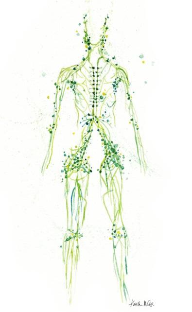 МРТ лимфоузлов брюшной полости