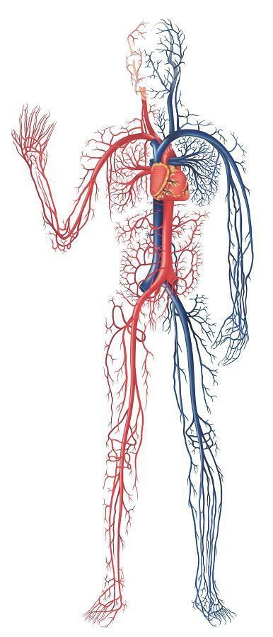 Что показывает МР ангиография