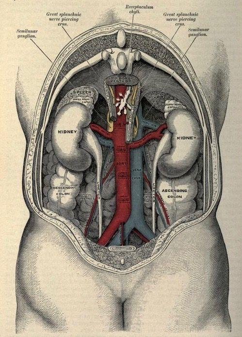МРТ сосудов брюшной полости